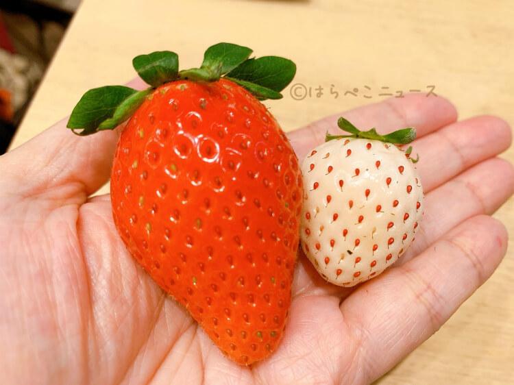 【実食レポ】『果実園リーベル新宿店』苺食べ比べ食べ放題!8種以上のいちごにフルーツサンドやタルトも!