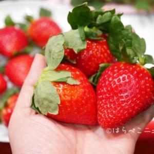 全種実食【いちご通販・お取り寄せ2021】黒いちごにあまりん!安い送料無料の苺から高級で甘いイチゴまで