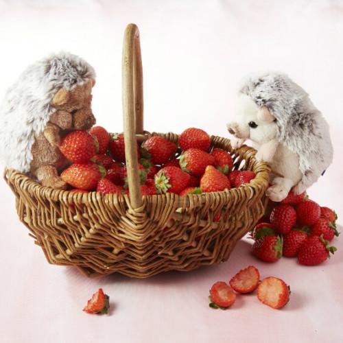 【いちごビュッフェ×ハリネズミ】ANAインターコンチネンタルホテル東京「シャンパンバー」で生苺食べ比べ