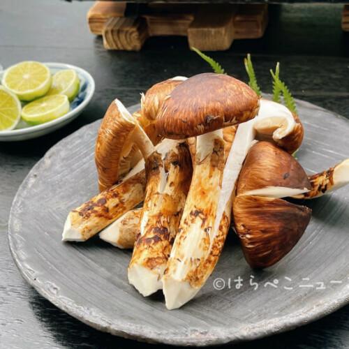 【松茸食べ放題・松茸料理2021】松茸ビュッフェに松茸づくし宿泊プラン!松茸ご飯・松茸コース・松茸会席も